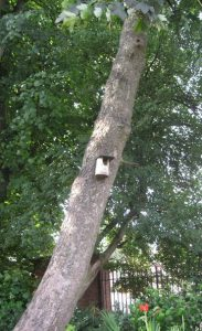 Bird box in the Peace Garden